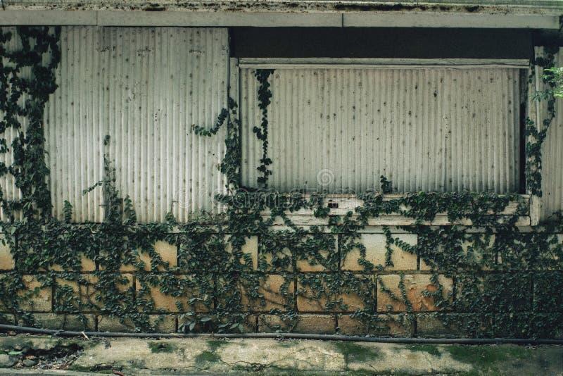 πράσινος τοίχος στοκ εικόνες