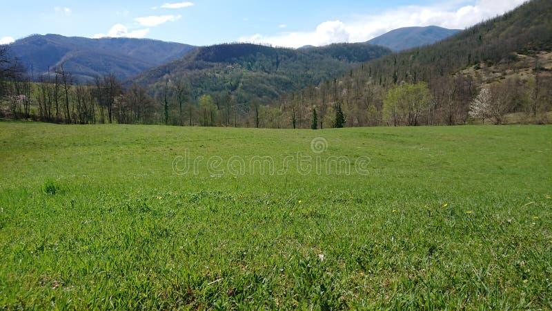 Πράσινος τομέας στοκ φωτογραφίες με δικαίωμα ελεύθερης χρήσης