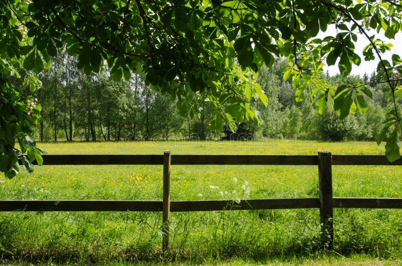 Πράσινος τομέας πίσω από έναν φράκτη στοκ εικόνα με δικαίωμα ελεύθερης χρήσης