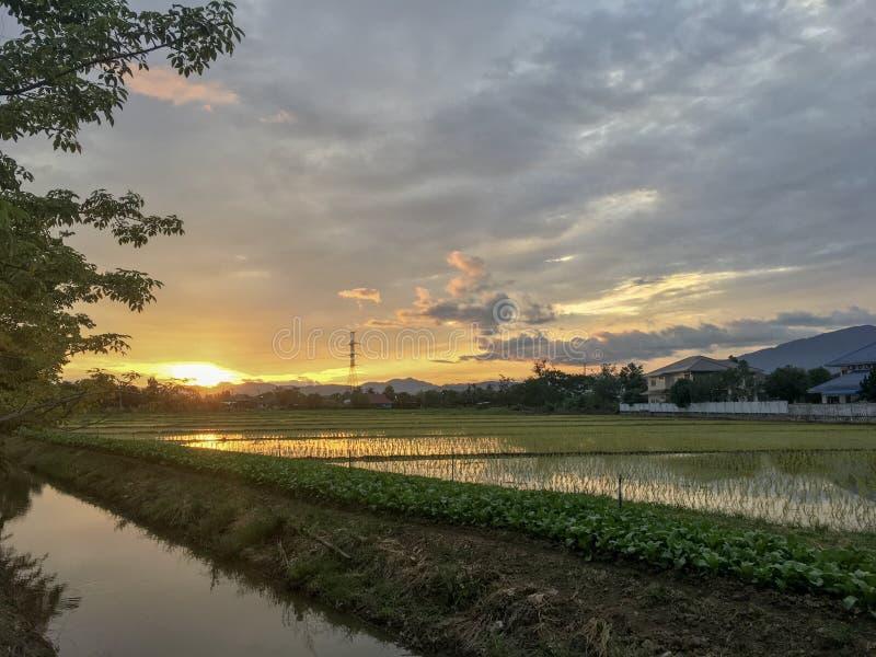 Πράσινος τομέας ρυζιού κοντά στον ποταμό κάτω από την αντανάκλαση ηλιοβασιλέματος με το σύννεφο το βράδυ στοκ εικόνες