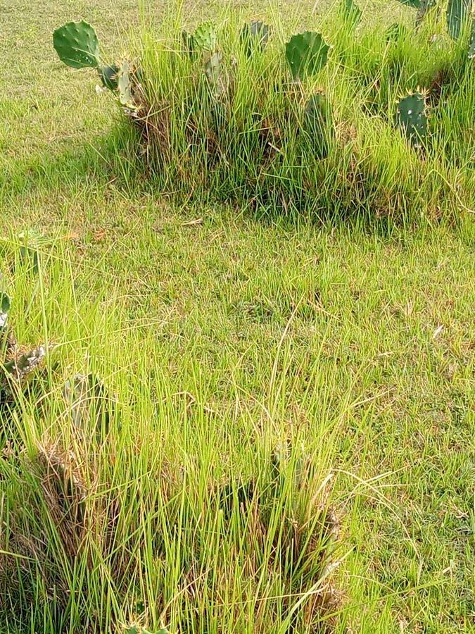 Πράσινος τομέας στοκ εικόνες