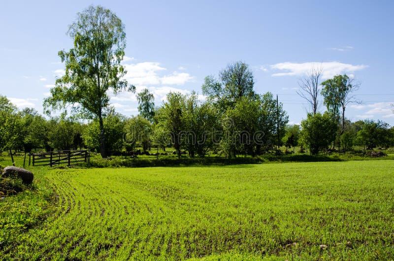 Πράσινος τομέας στοκ εικόνες με δικαίωμα ελεύθερης χρήσης