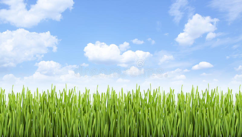 Πράσινος τομέας στοκ φωτογραφίες