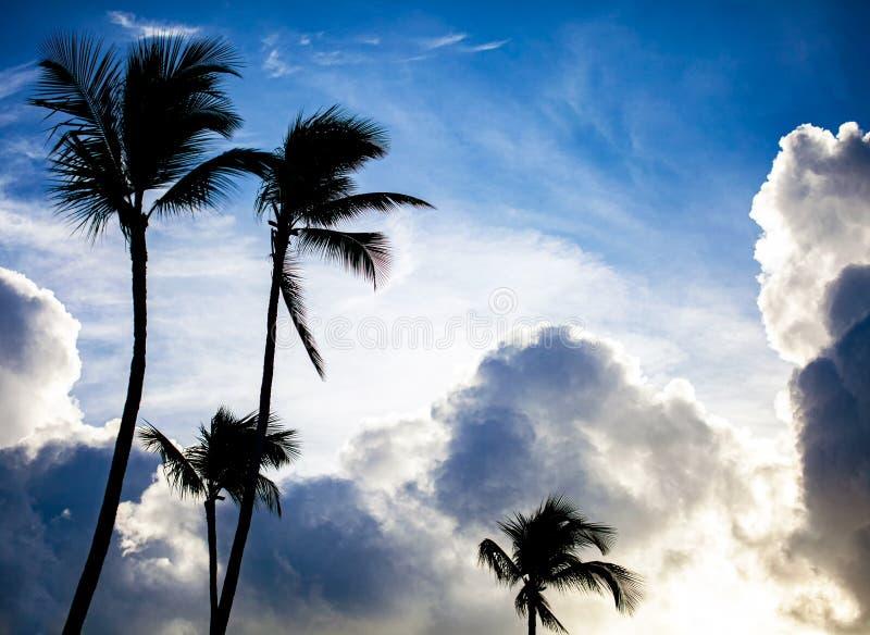 Πράσινος φοίνικας στο υπόβαθρο μπλε ουρανού στοκ εικόνα με δικαίωμα ελεύθερης χρήσης