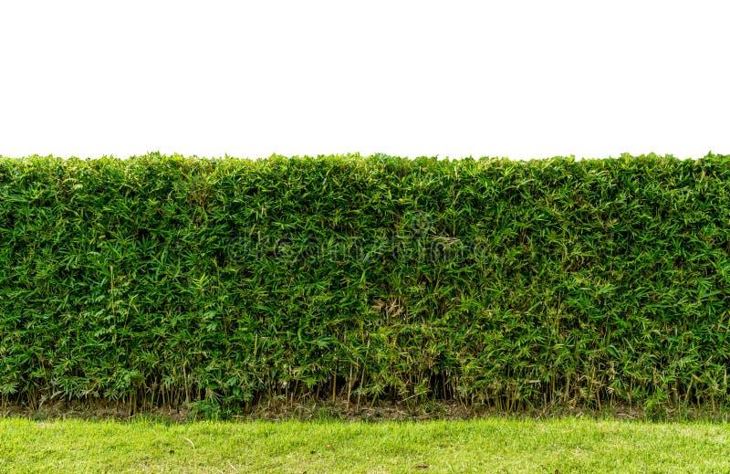 Πράσινος φράκτης φρακτών στοκ εικόνα