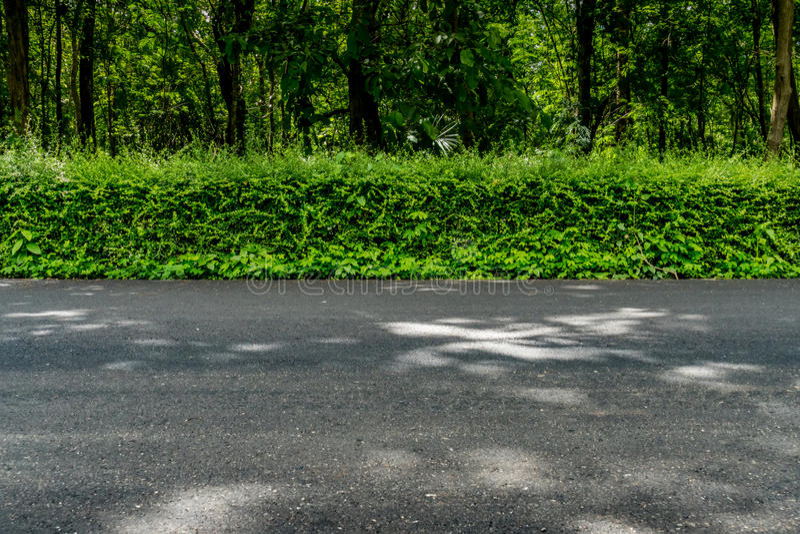 Πράσινος φράκτης φρακτών στοκ εικόνες με δικαίωμα ελεύθερης χρήσης