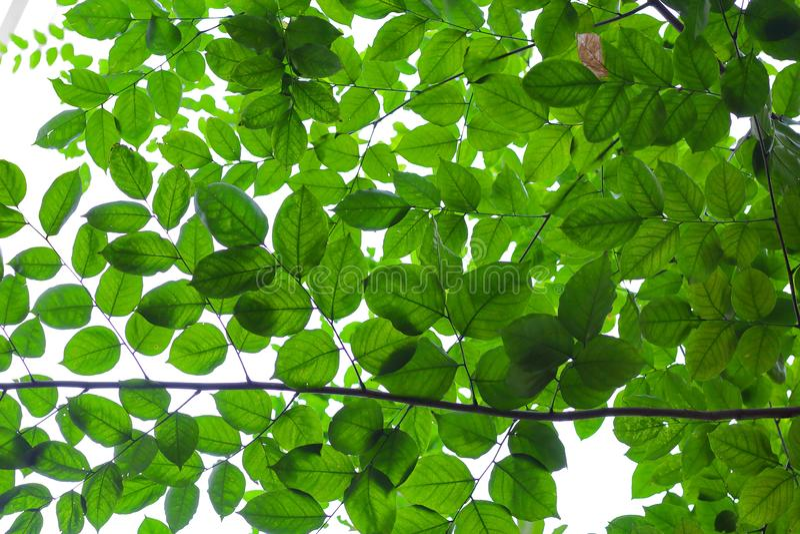 πράσινος φυλλώδης ανασκό στοκ φωτογραφίες με δικαίωμα ελεύθερης χρήσης