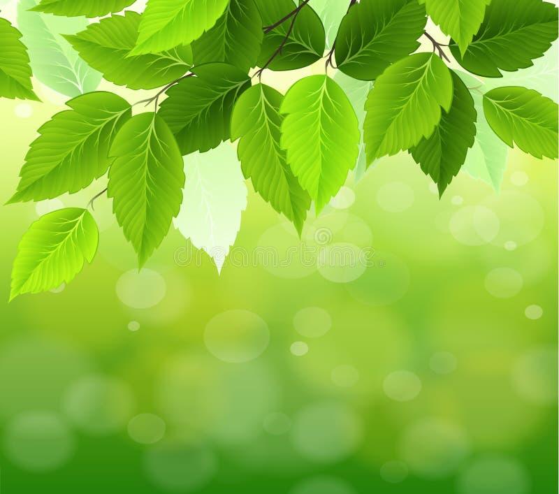 πράσινος φυσικός εκλεκτικός εστίασης ανασκόπησης ελεύθερη απεικόνιση δικαιώματος