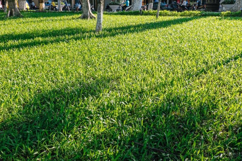 πράσινος φυσικός χλόης αν&a στοκ εικόνα