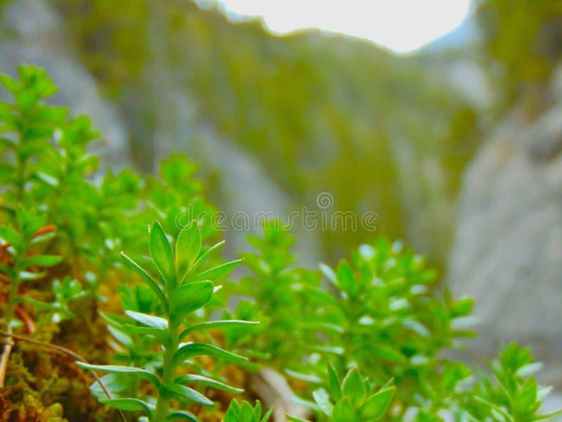 πράσινος φυλλώδης στοκ φωτογραφία με δικαίωμα ελεύθερης χρήσης