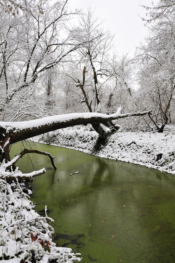 πράσινος χειμώνας λιμνών στοκ εικόνες