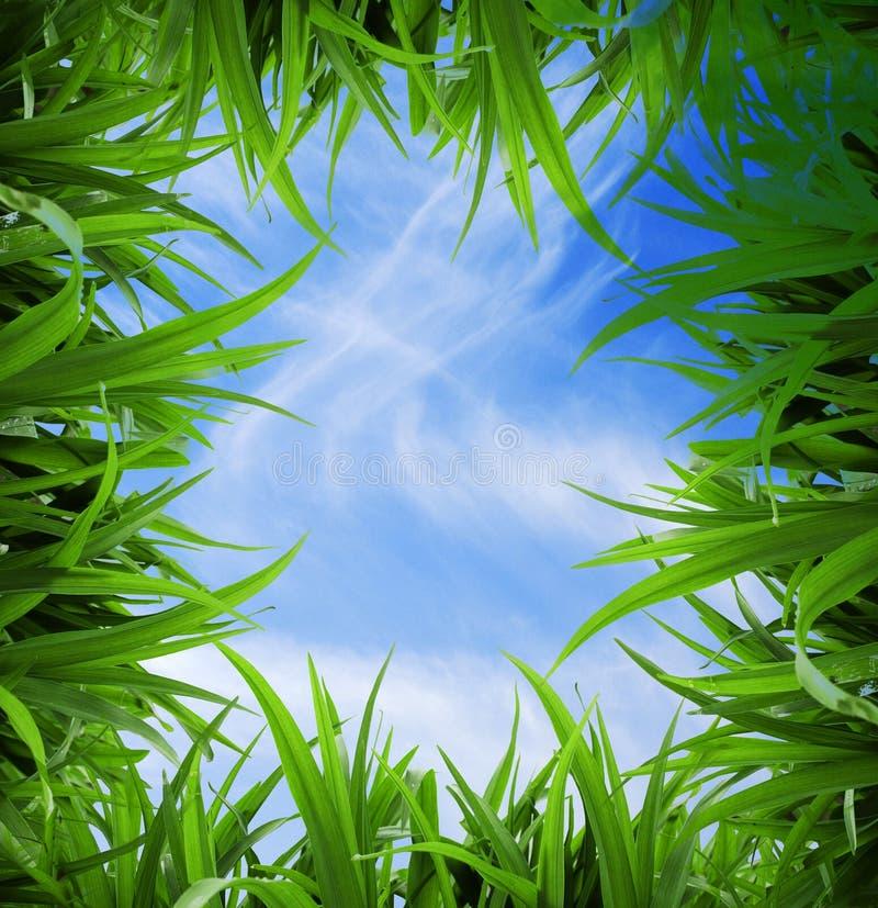 πράσινος χλόης που απομονώνεται στοκ φωτογραφίες με δικαίωμα ελεύθερης χρήσης