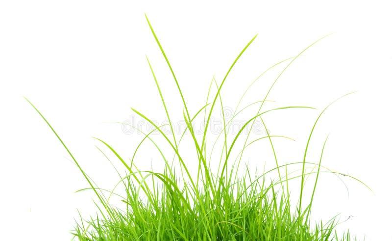 πράσινος χλόης που απομο& στοκ φωτογραφίες με δικαίωμα ελεύθερης χρήσης