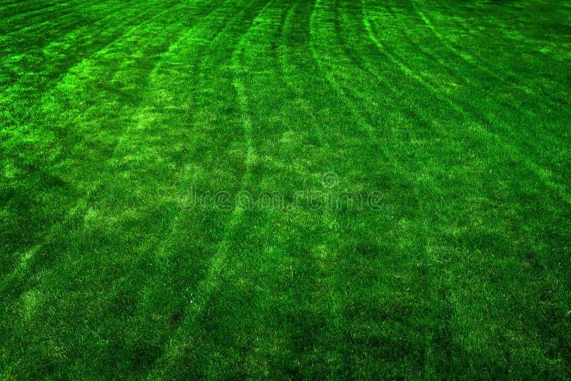 Πράσινος χορτοτάπητας με την αύξηση γραμμών κοπής στοκ εικόνες με δικαίωμα ελεύθερης χρήσης