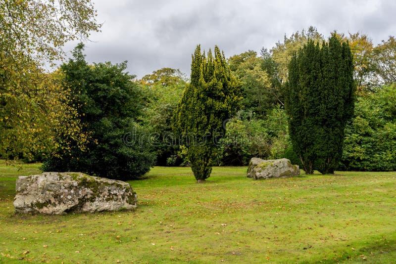Πράσινος χορτοτάπητας χλόης με τα πεσμένα κίτρινα φύλλα στην εποχή φθινοπώρου, πάρκο Hazlehead, Αμπερντήν, Σκωτία στοκ εικόνες με δικαίωμα ελεύθερης χρήσης