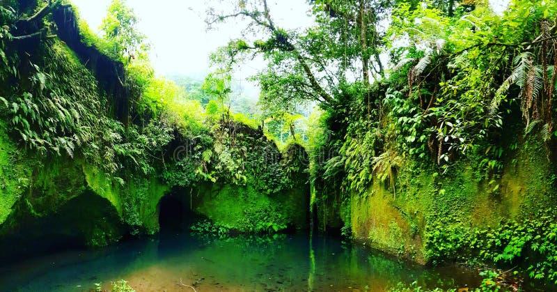 Πράσινος όρμος στοκ φωτογραφία με δικαίωμα ελεύθερης χρήσης