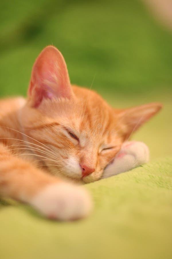 πράσινος ύπνος στοκ φωτογραφία
