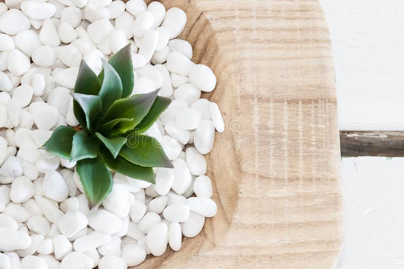 Πράσινος succulent στα άσπρα χαλίκια με το εκλεκτής ποιότητας ξύλινο υπόβαθρο στοκ φωτογραφία