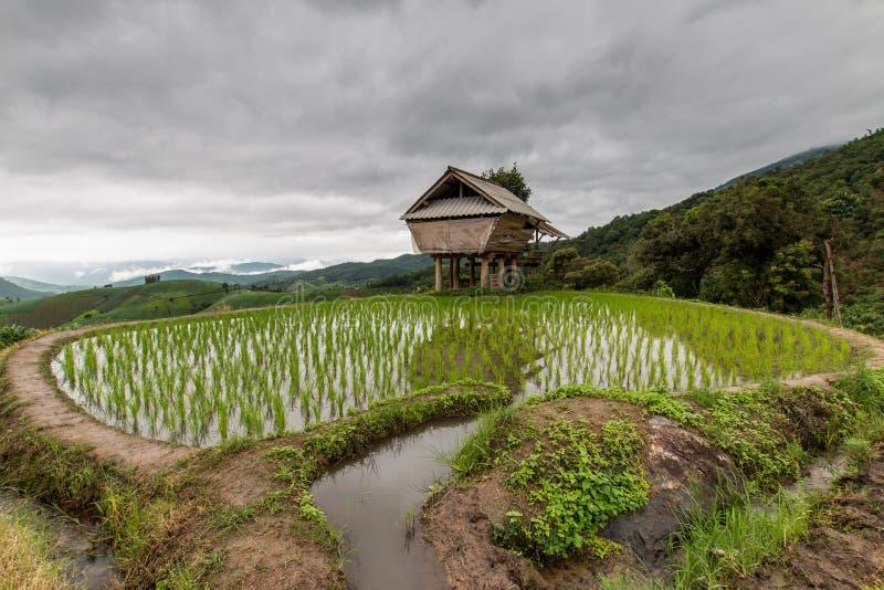Πράσινος Terraced τομέας ρυζιού στο PA Pong Pieng, Mae Chaem, Chiang Mai, Ταϊλάνδη στοκ εικόνα με δικαίωμα ελεύθερης χρήσης