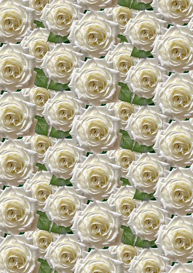 Πράσινο άνευ ραφής υπόβαθρο με τα μεγάλα άσπρα τριαντάφυλλα ελεύθερη απεικόνιση δικαιώματος