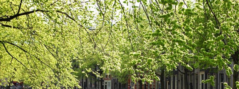 Πράσινο άνθισμα άνοιξη ήπια των αστικών δέντρων r στοκ εικόνα με δικαίωμα ελεύθερης χρήσης