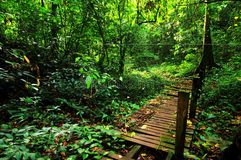 Πράσινο δάσος στο gomantong στοκ εικόνες