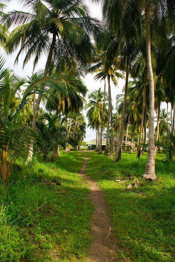 Πράσινο δάσος φοινικών στο κολομβιανό νησί Mucura στοκ εικόνα