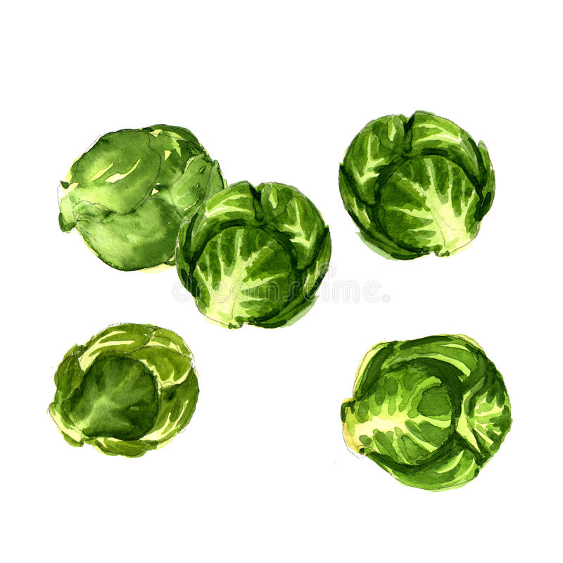 Πράσινο λάχανο νεαρών βλαστών των Βρυξελλών που απομονώνεται ελεύθερη απεικόνιση δικαιώματος