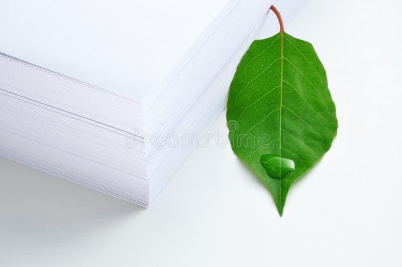πράσινο έγγραφο φύλλων στοκ εικόνες