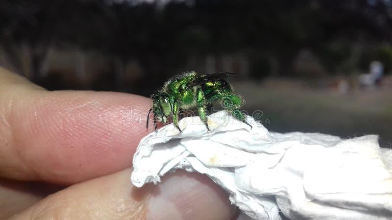 πράσινο έντομο στοκ φωτογραφία με δικαίωμα ελεύθερης χρήσης