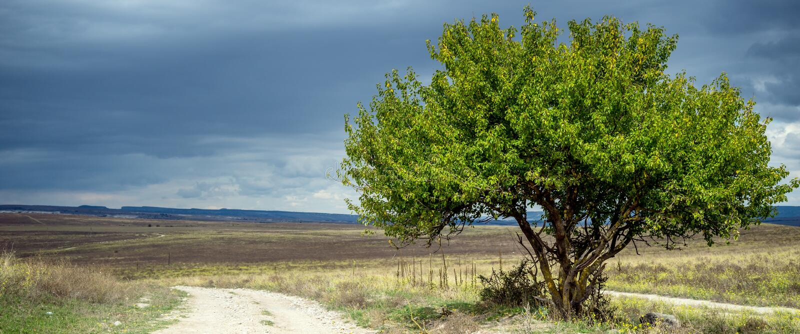 πράσινο δέντρο χλόης πεδίων στοκ φωτογραφία με δικαίωμα ελεύθερης χρήσης