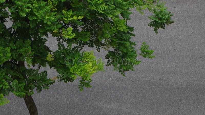 πράσινο δέντρο στοκ φωτογραφία