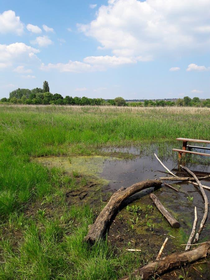 πράσινο έλος στοκ εικόνα