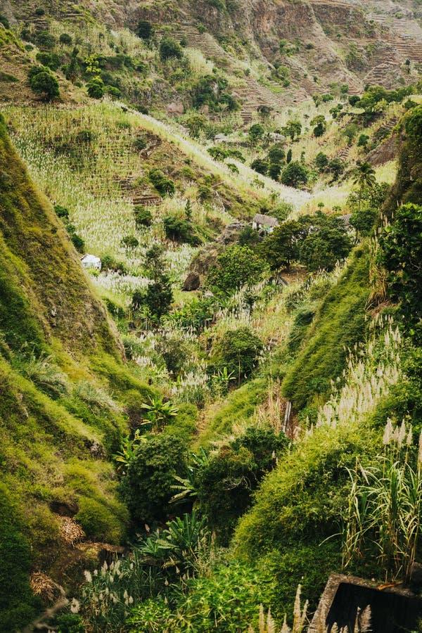 Πράσινο Ακρωτήριο Τοπίο της βλάστησης και των βουνών και μερικές τοπικές κατοικίες της κοιλάδας του Paul Καλλιεργημένο ζαχαροκάλα στοκ εικόνες