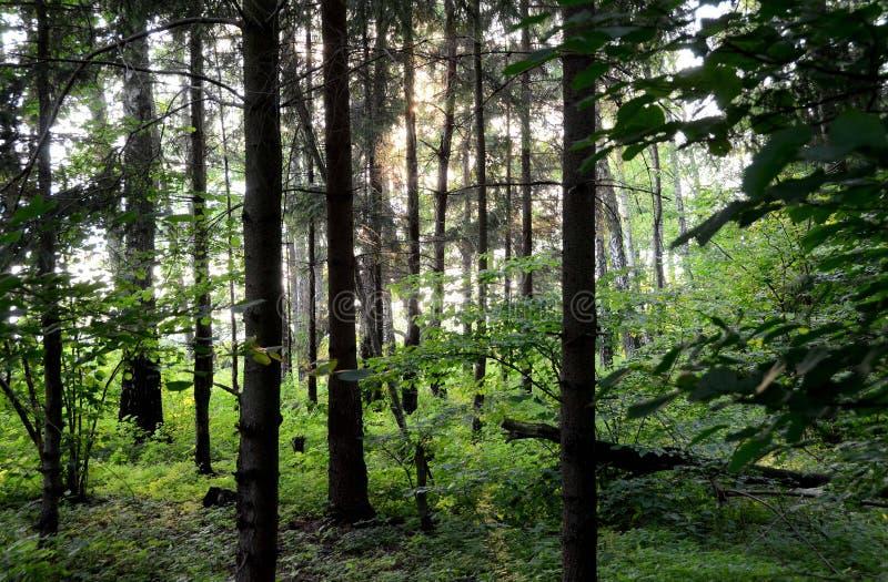 Πράσινο δασικό Masuria στοκ φωτογραφίες με δικαίωμα ελεύθερης χρήσης