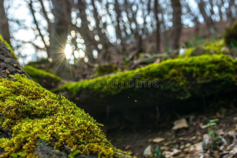 Πράσινο βρύο στο δάσος στοκ φωτογραφία με δικαίωμα ελεύθερης χρήσης