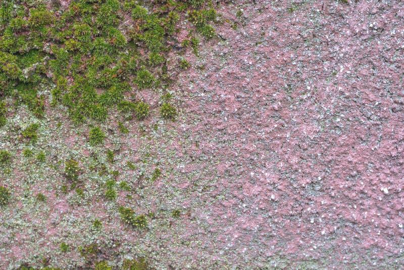Πράσινο βρύο στο κόκκινο υπόβαθρο τσιμέντου Mossy λεπτομέρεια στοκ φωτογραφίες με δικαίωμα ελεύθερης χρήσης