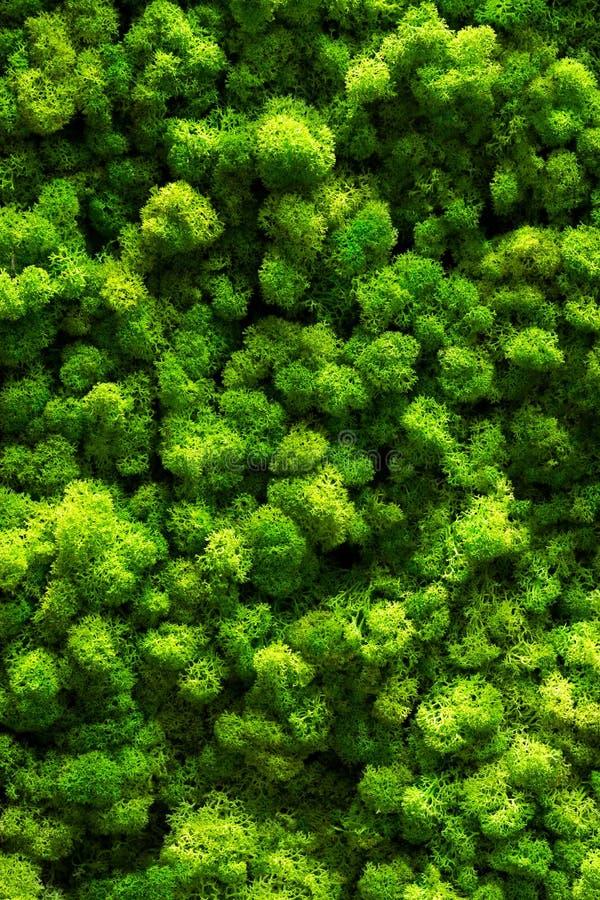 Πράσινο βρύο στο παλαιό πάτωμα γραφείων Εσωτερικό σχέδιο στενός επάνω τοπ άποψης στοκ εικόνα με δικαίωμα ελεύθερης χρήσης