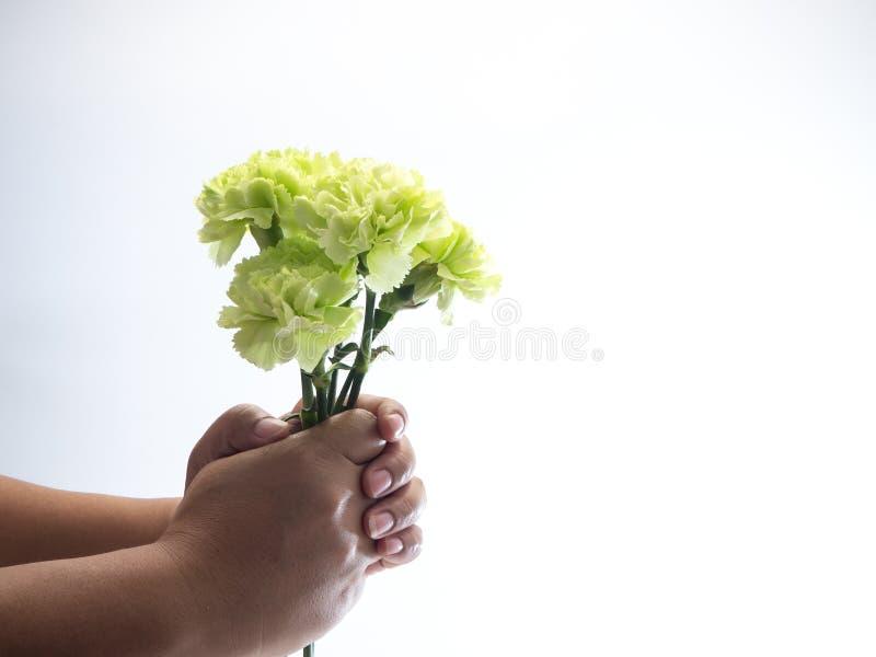 Πράσινο γαρίφαλο λαβής χεριών γυναικών στο λευκό στοκ φωτογραφίες με δικαίωμα ελεύθερης χρήσης