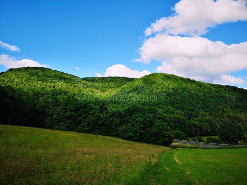 Πράσινο γρασίδι και δασικός λόφος με γαλάζιο ουρανό στοκ φωτογραφία