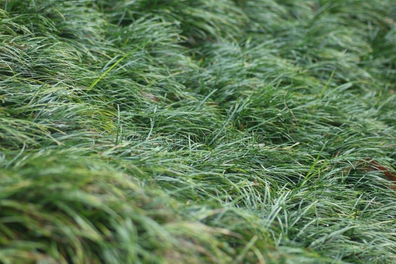 Πράσινο γυαλί στο πάτωμα, όμορφη σύσταση στην έννοια φυσικού, σχεδίου κήπων στοκ εικόνα με δικαίωμα ελεύθερης χρήσης
