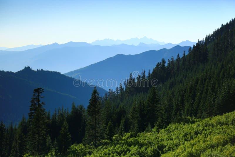 Πράσινο δάσος με τα μπλε βουνά στο υπόβαθρο στοκ φωτογραφία με δικαίωμα ελεύθερης χρήσης