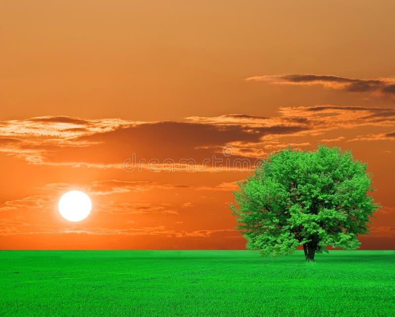 πράσινο δέντρο ηλιοβασιλέματος στοκ εικόνες
