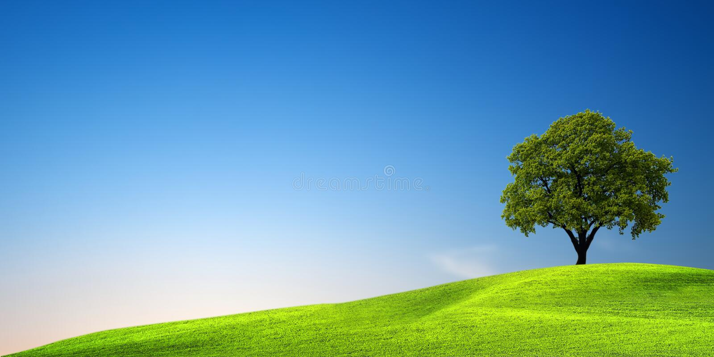 πράσινο δέντρο ηλιοβασι&lambda στοκ εικόνα