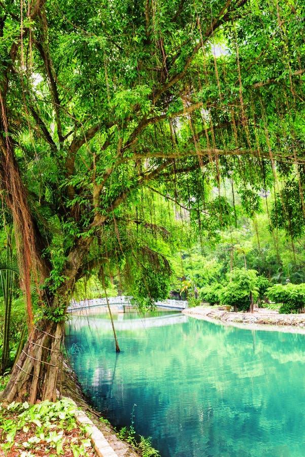 Πράσινο δέντρο κοντά στο κανάλι με το κυανό νερό στον τροπικό κήπο στοκ φωτογραφία με δικαίωμα ελεύθερης χρήσης