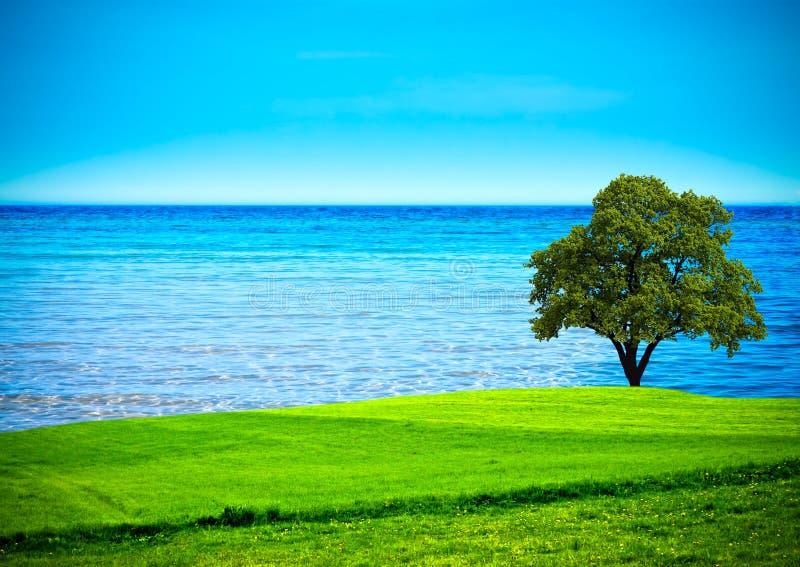 πράσινο δέντρο πεδίων στοκ εικόνες