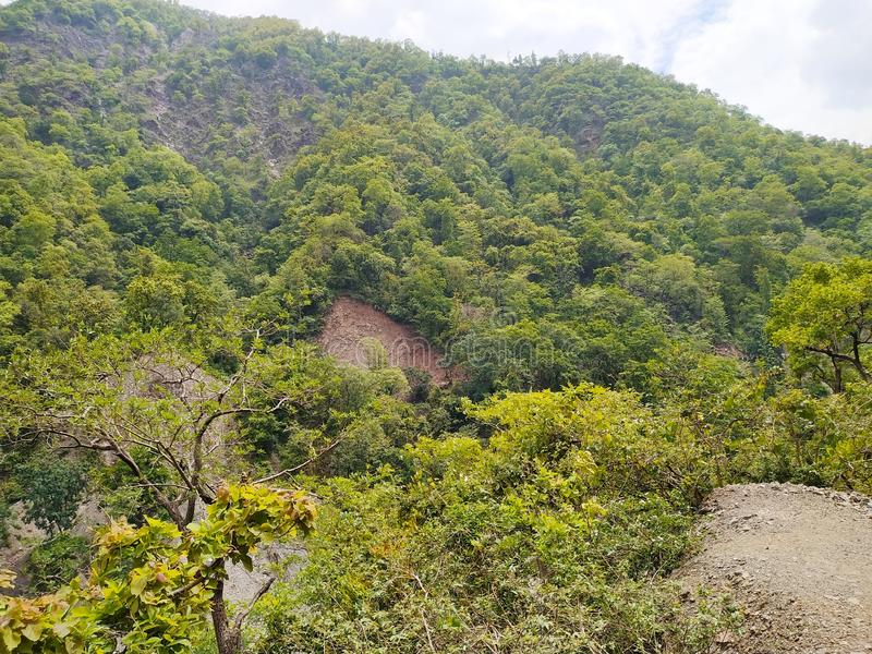Πράσινο δέντρο στο τοπ βουνό στοκ φωτογραφία με δικαίωμα ελεύθερης χρήσης