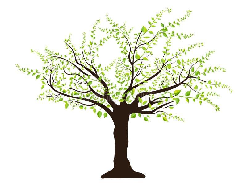 πράσινο δέντρο φύλλων διανυσματική απεικόνιση