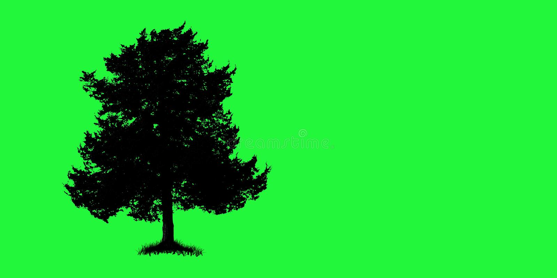 πράσινο δέντρο στοκ φωτογραφίες με δικαίωμα ελεύθερης χρήσης