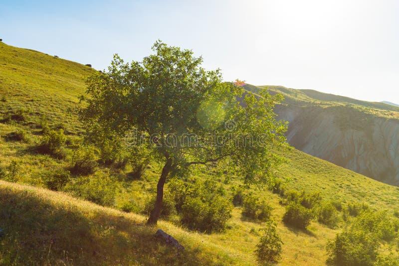 Πράσινο δέντρο mountainside στοκ εικόνες